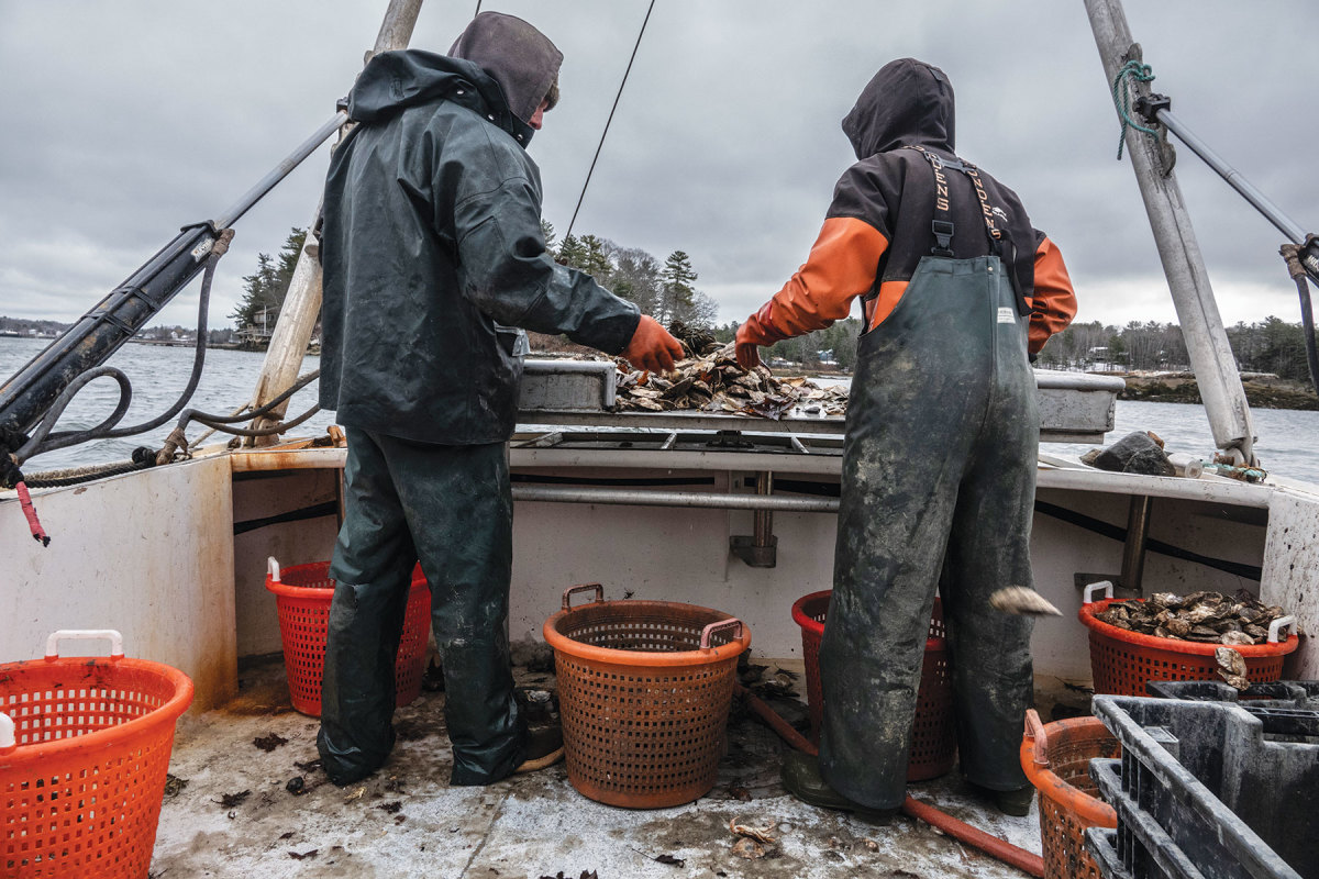 Jonah and Maise send oysters flying through the air  as they cull them at the stern.
