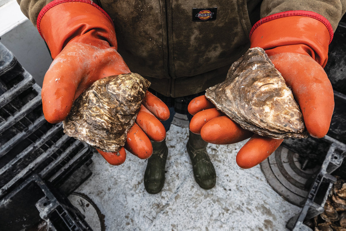 Carter Newell holds a couple of 5- to 6- inch jumbo oysters.