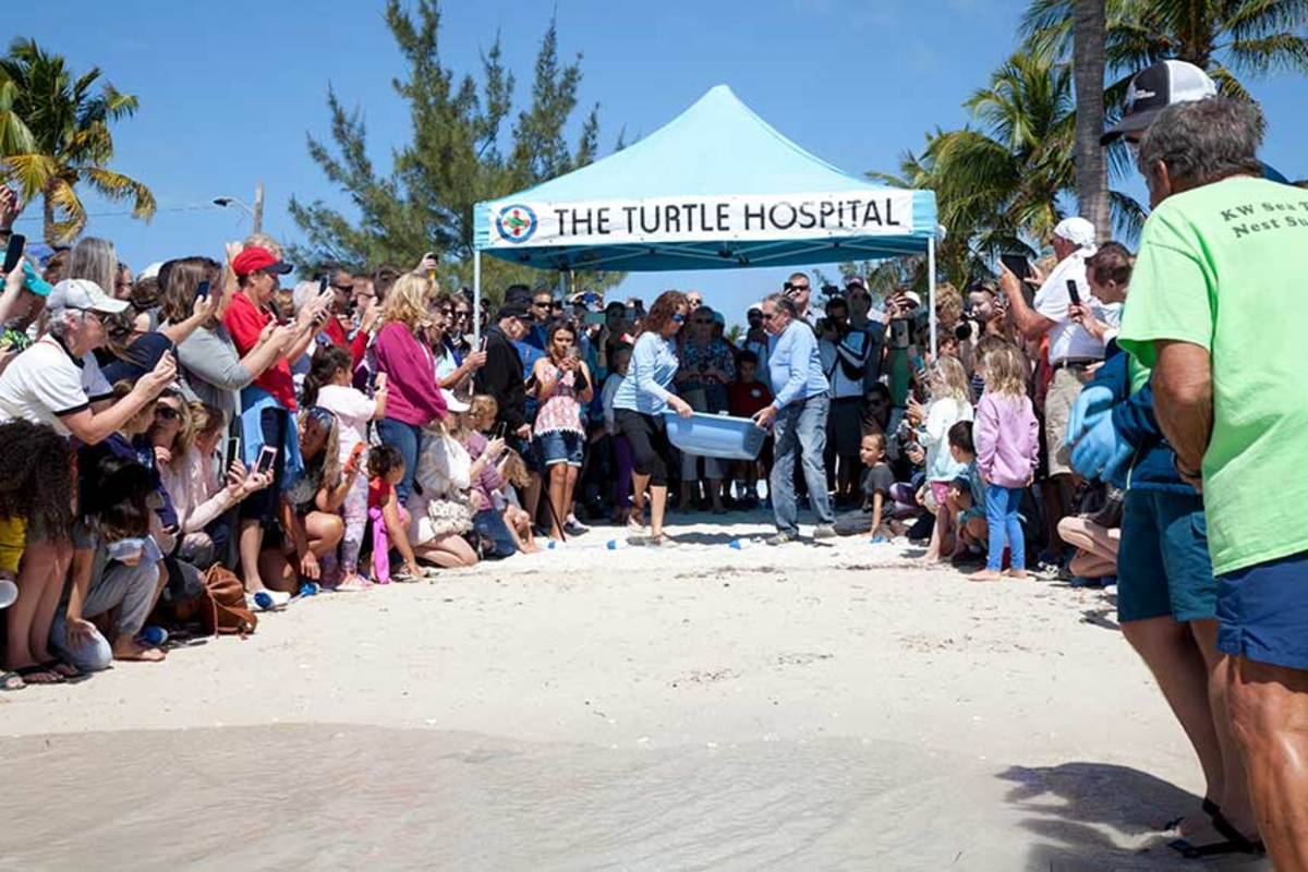 A turtle release draws a large crowd.