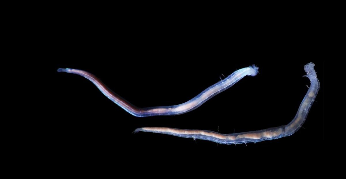 new-deep-sea-species-full-width.jpg.thumb.1920.1920.png