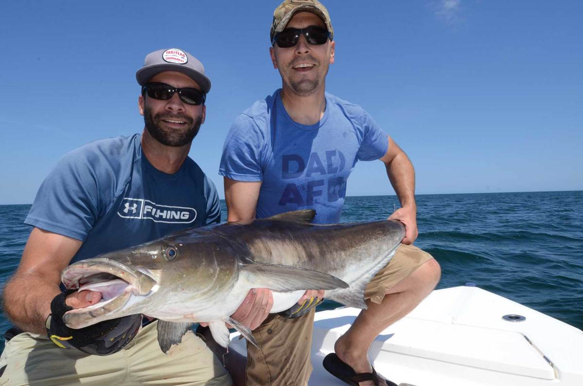 Cobia arrive in Lower Chesapeake Bay in June, keeping anglers busy all summer.