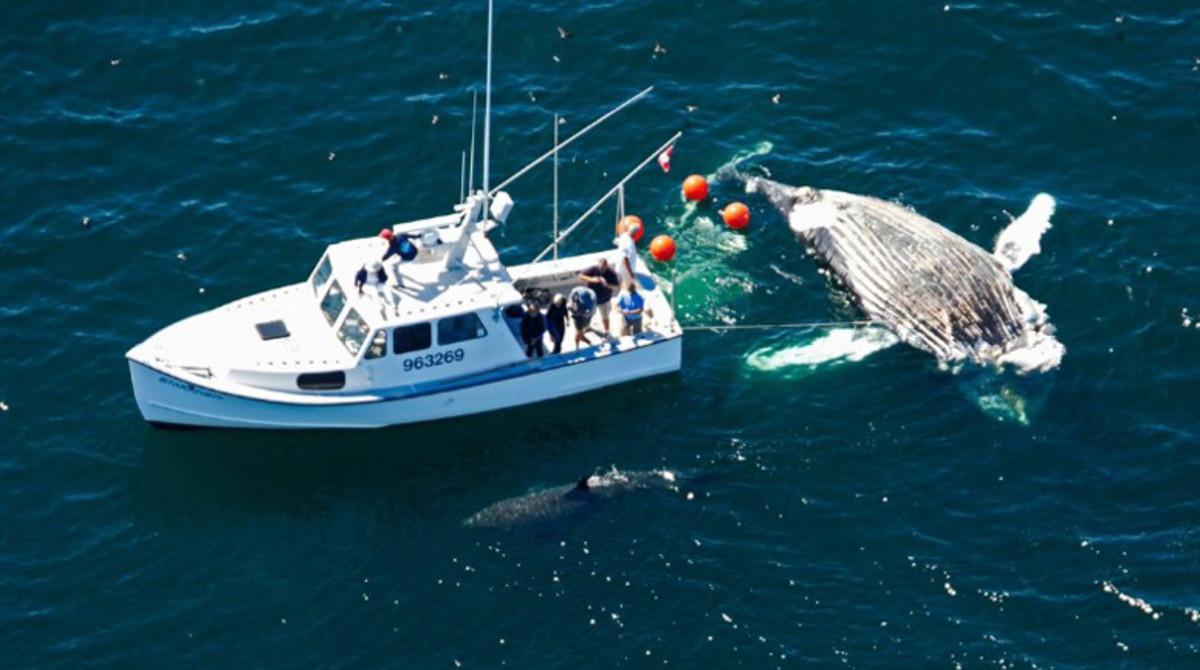 shark-next-to-boat