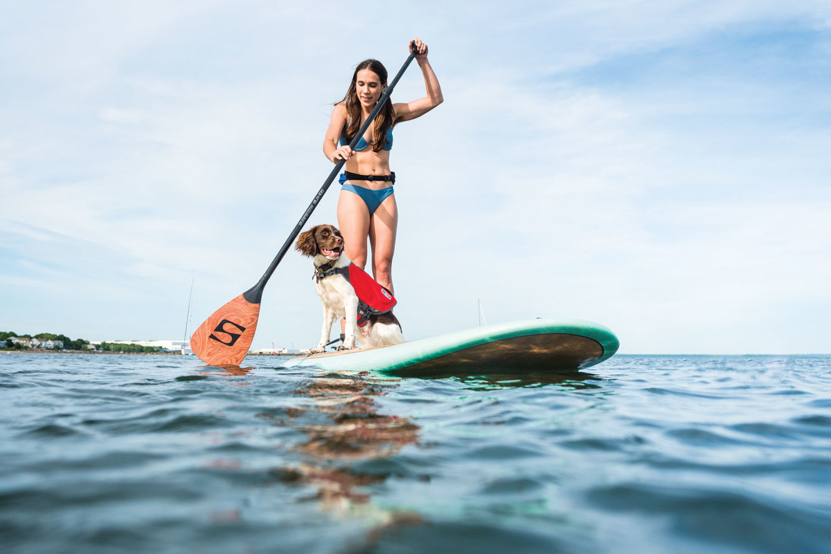 To get a dog comfortable on a paddleboard, start the training process on land, then move to the water.